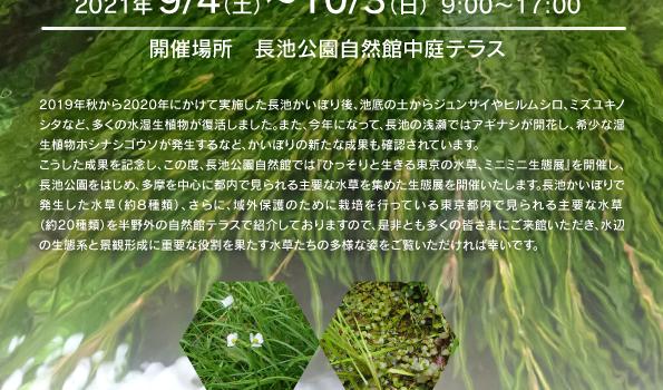 ひっそりと生きる東京の水草、ミニミニ生態展
